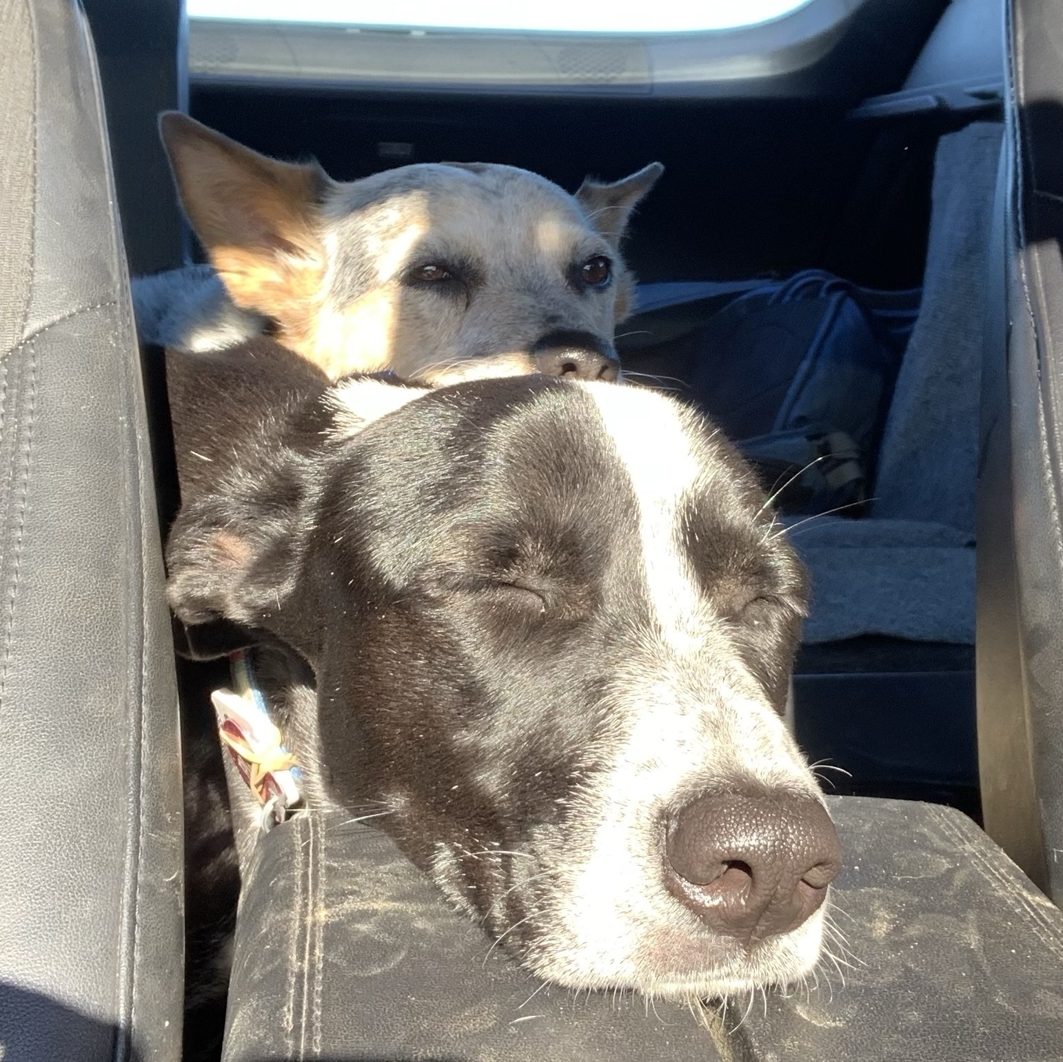 luna and tilly, two sleeping dogs