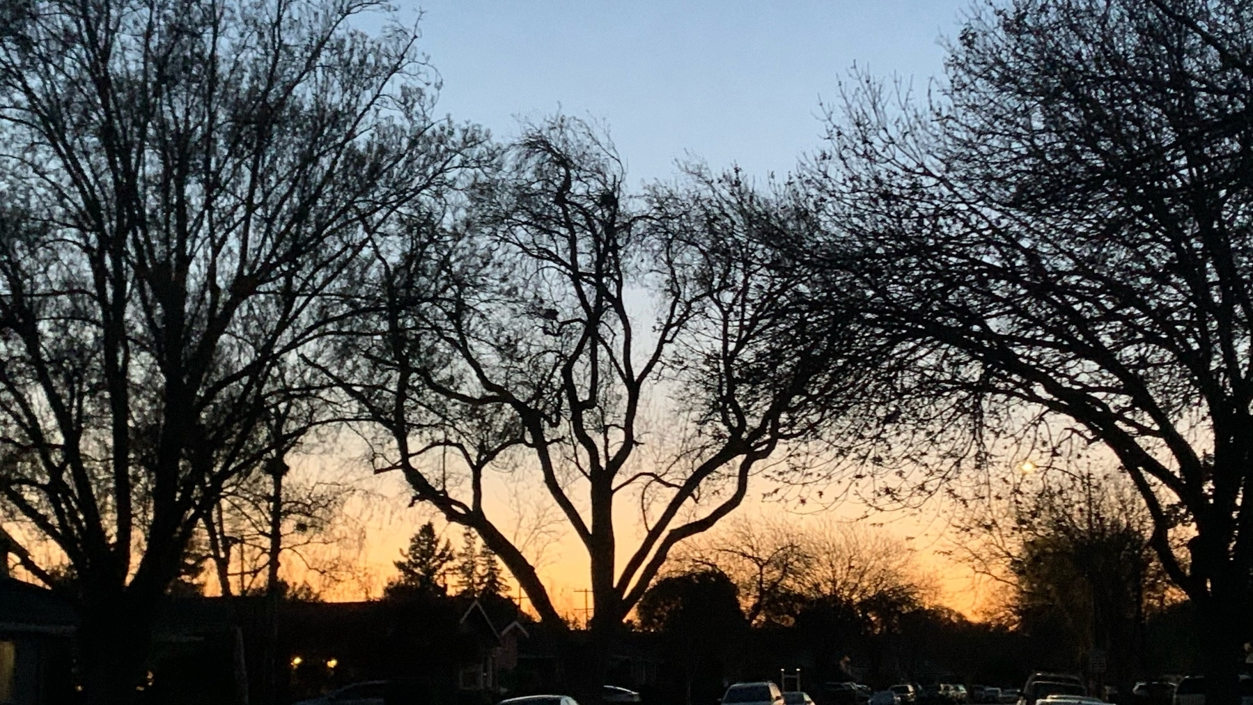 sunset seen through street trees silhouettes