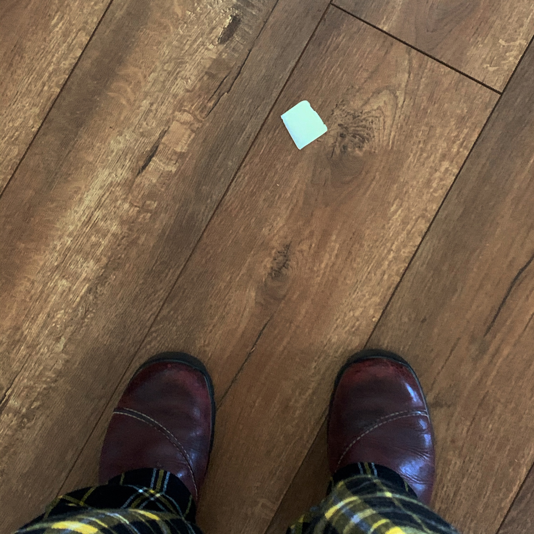 a pat of butter fell to the floor, this is my view of it