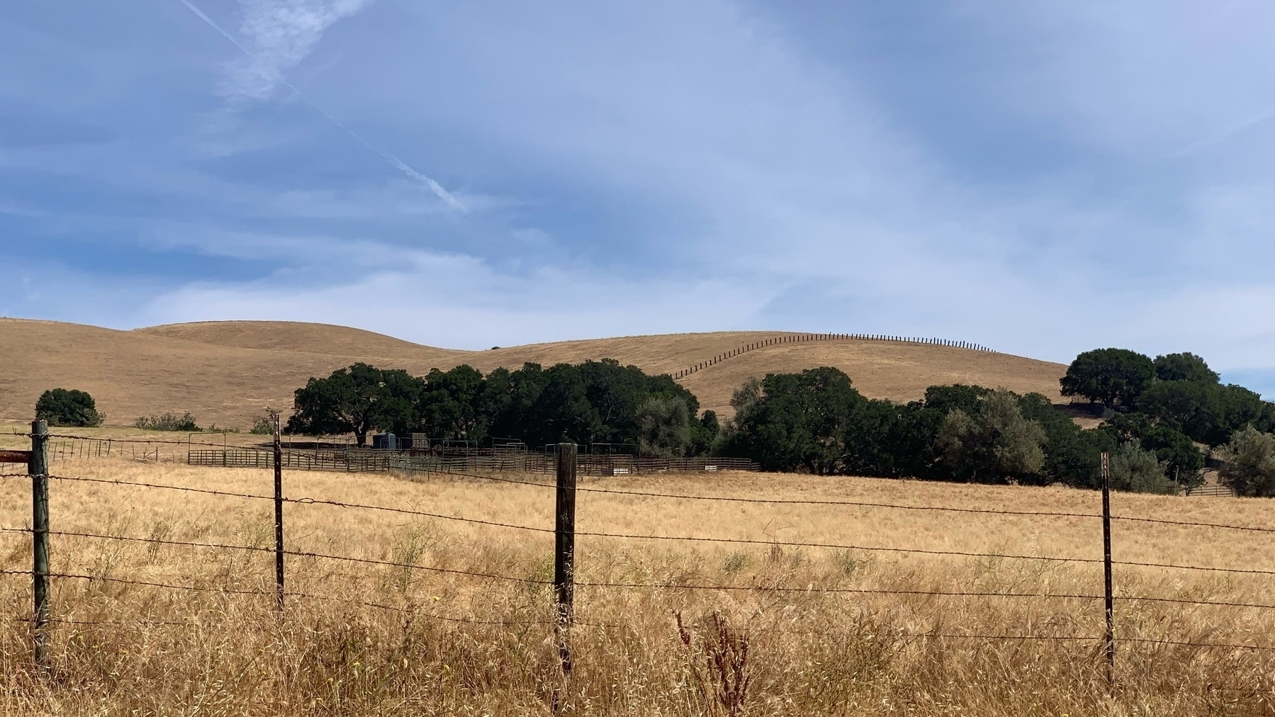 Golden hillside of yellow grass with a few trees and a wispy cloud sky